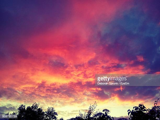 Dramatic Sunset Over Tree Tops