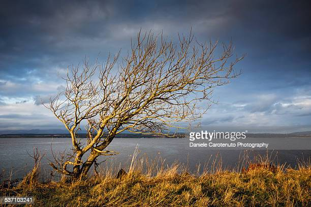 dramatic tree - daniele carotenuto stock pictures, royalty-free photos & images