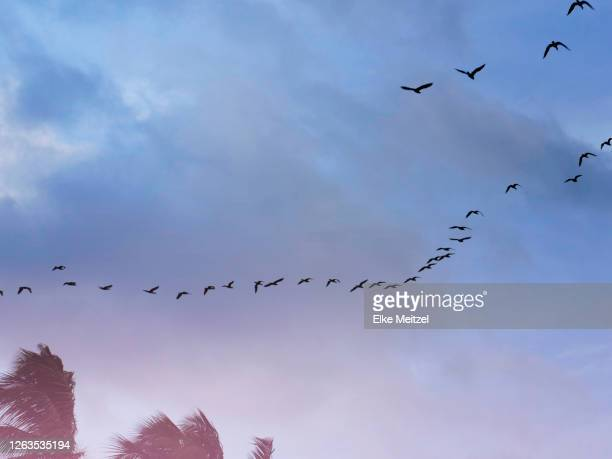 dramatic tropical sky with birds - sri lanka stock pictures, royalty-free photos & images