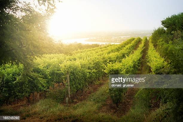 dramatic vineyard sunrise in france - rhone stock pictures, royalty-free photos & images