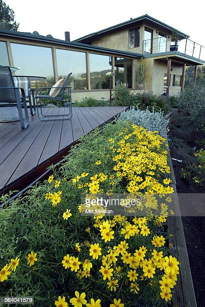 A draught tolerant garden mostly California native located in backyard of Brentwood home of Al and Myra Rosen The windows of their home are triple...