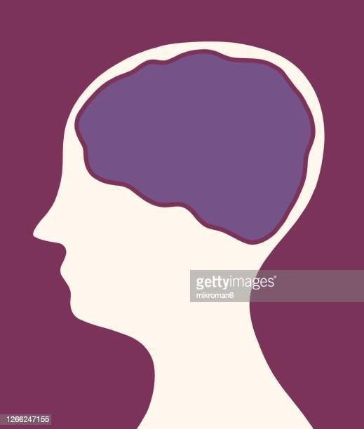 drawing of a human head with the a brain - human interest stock pictures, royalty-free photos & images