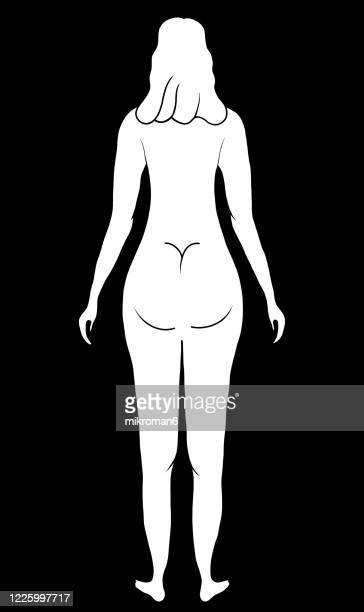 drawing of a naked woman - beautiful bare bottoms stock pictures, royalty-free photos & images