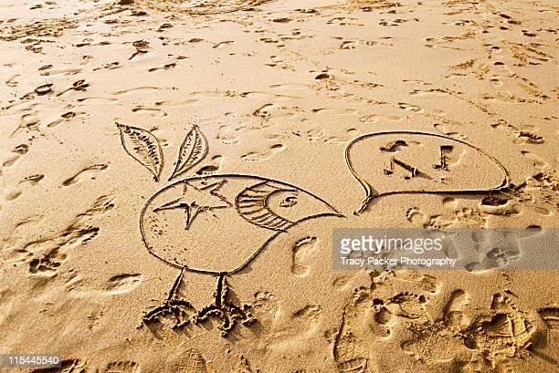 Drawing of  bird on  sandy beach.