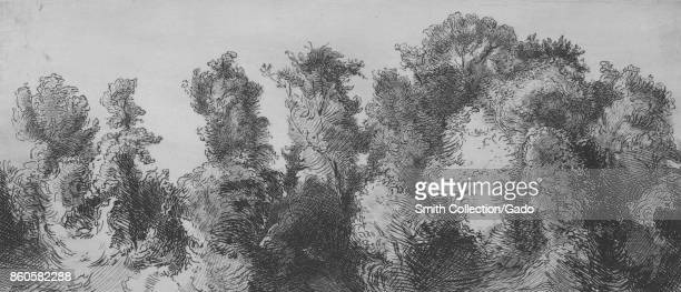 Drawing of trees in forest 1873 From the New York Public Library