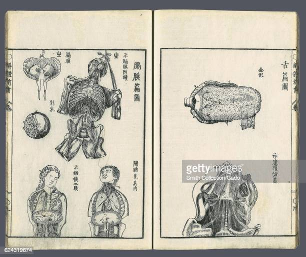 Drawings of the tongue dissection of the throat dissected human thoraxes the diaphragm a hanging diaphragm and a dissected female breast by 'Kaitai...