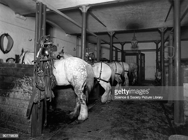 Dray horses in the Mint Stables at Paddington station, London, 13 March 1936. Official Great Western Railway photograph.