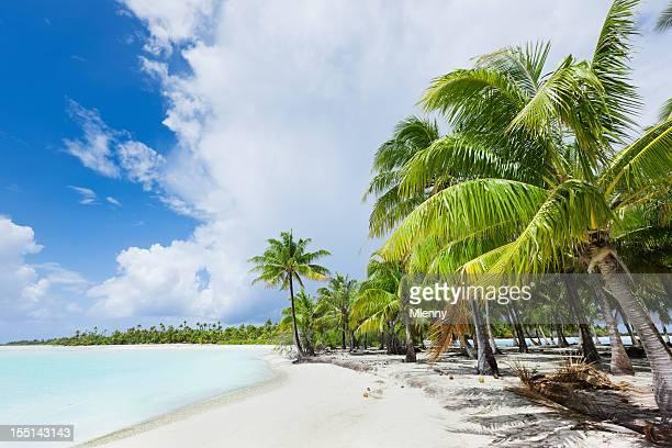dream beach bora-bora coconut palm trees french polynesia - bora bora stock pictures, royalty-free photos & images