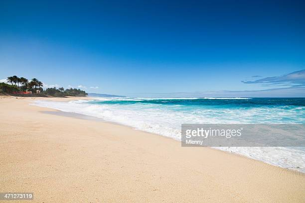 Dream Beach Hawaii
