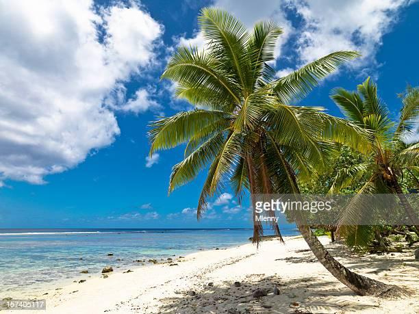 spiaggia da sogno - isole cook foto e immagini stock