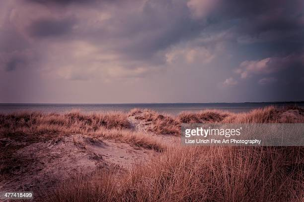 dream beach - lise ulrich stock pictures, royalty-free photos & images