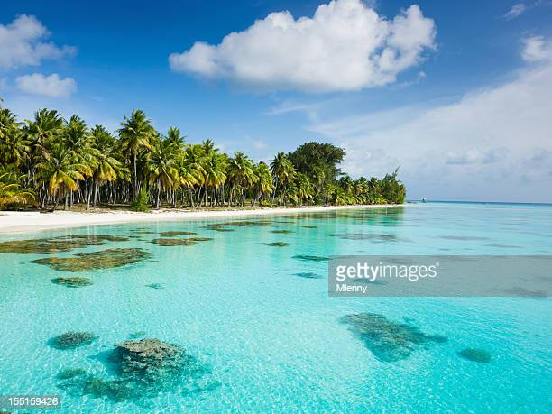 dream beach under palm trees fakarava french polynesia - polynesia stock pictures, royalty-free photos & images