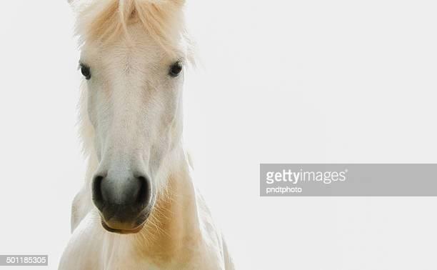 dream horse - caballo blanco fotografías e imágenes de stock