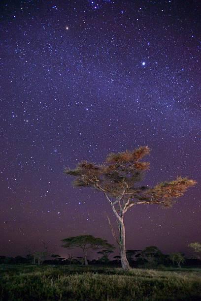 Dreaming in Tanzania