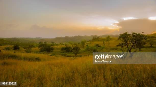 dreamland - áfrica del oeste fotografías e imágenes de stock