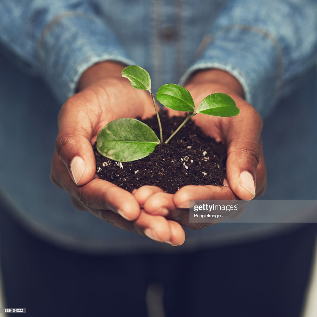 Dreams need to be nurtured : Stock Photo