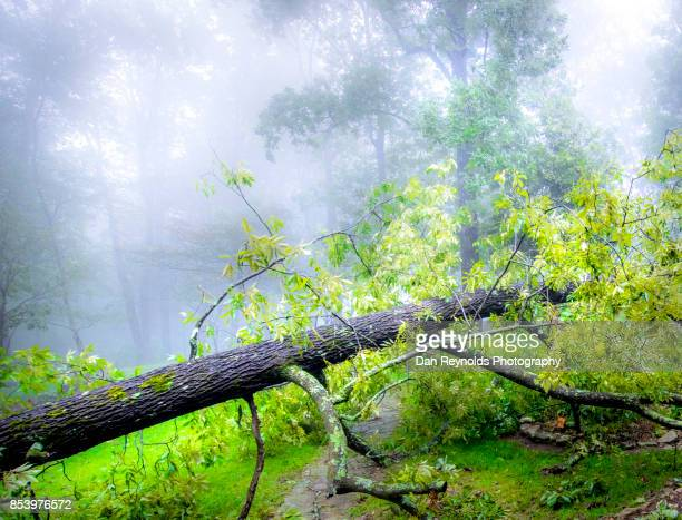 dreamy fallen tree during storm with fog - fallen tree stock pictures, royalty-free photos & images