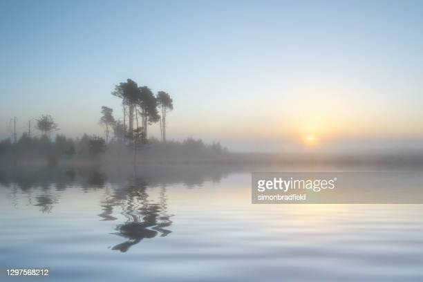 dromerige lakeside sunrise - waterkant stockfoto's en -beelden