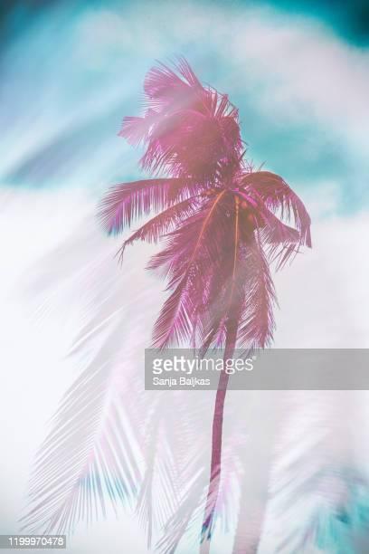 dreamy palm tree - tropical tree stockfoto's en -beelden