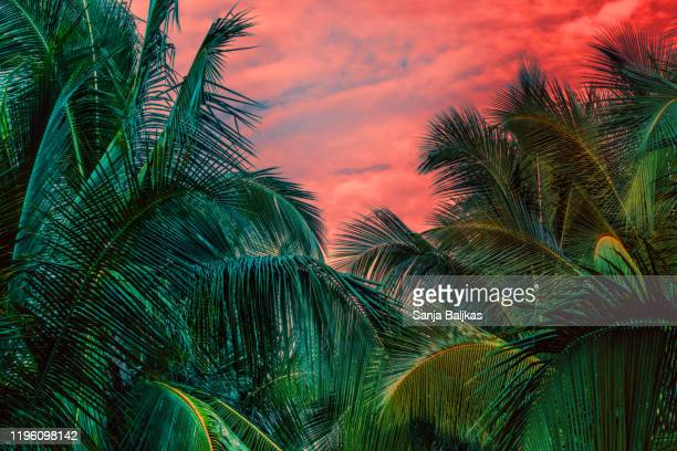 dreamy palm trees in jungle - clima tropicale foto e immagini stock