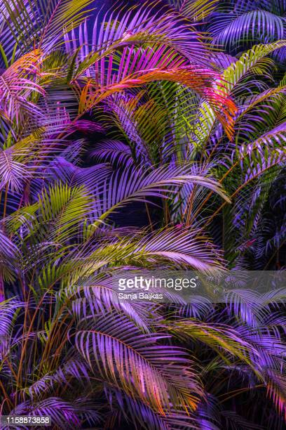 dreamy palm trees in purple pink colors - kandy kandy district sri lanka stock pictures, royalty-free photos & images