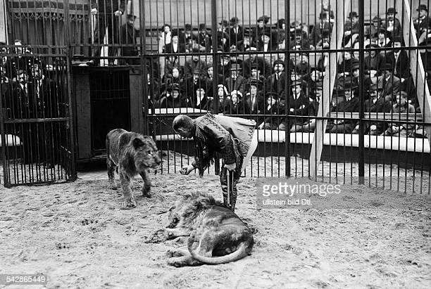 Dreharbeiten für einen Zirkusfilm in einem Filmatelier der Dompteur lockt die Löwen in den Raubtierkäfig 1914Foto Conrad HünichFoto ist Teil einer...