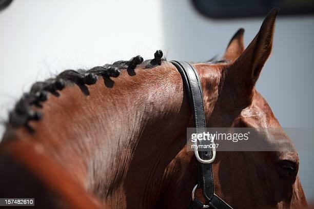 馬場馬術編み込みたてがみ - 馬場馬術 ストックフォトと画像