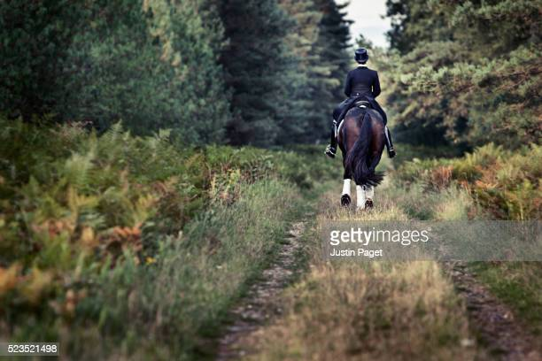 Dressage Horse on Forest Path