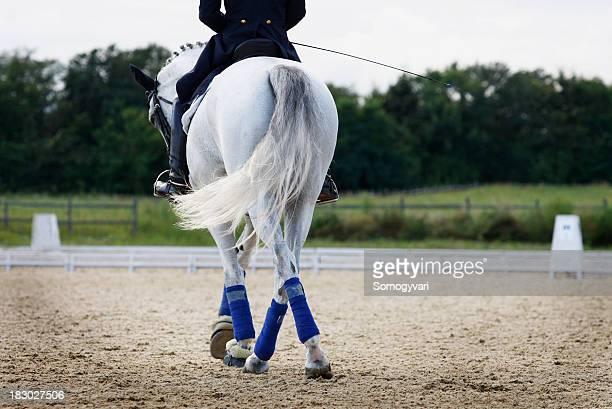 Dressurreiten horse