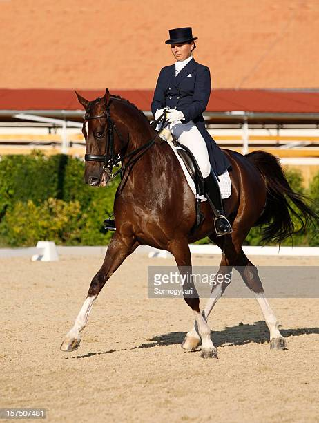 dressage scene, half-pass in trot - dressage stock pictures, royalty-free photos & images