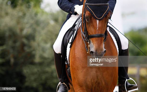 dressage scene - dressage stock pictures, royalty-free photos & images