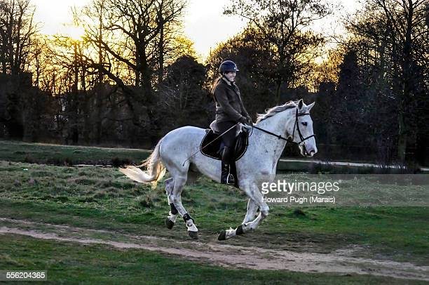 dressage sunset horse ride - howard pugh stock pictures, royalty-free photos & images
