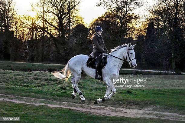 Dressage sunset horse ride