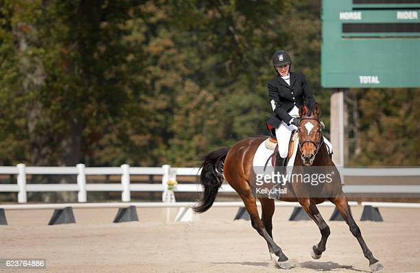 dressage test - equestrian event stock pictures, royalty-free photos & images