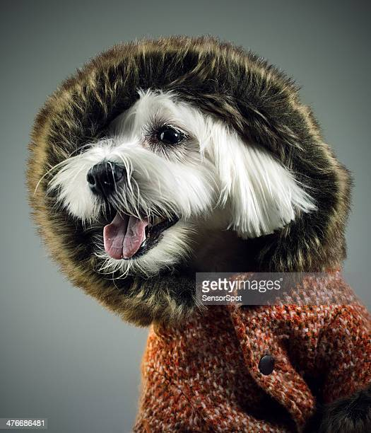 Dressed dog