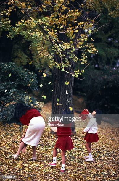 Dressed in red and white western dress Japanese girls dance in the fallen leaves round a tree Kyoto Honshu Japan