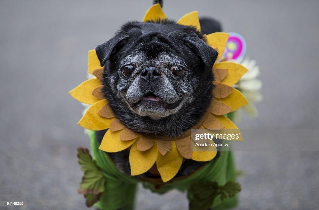 Halloween Dog Parade in New York : News Photo