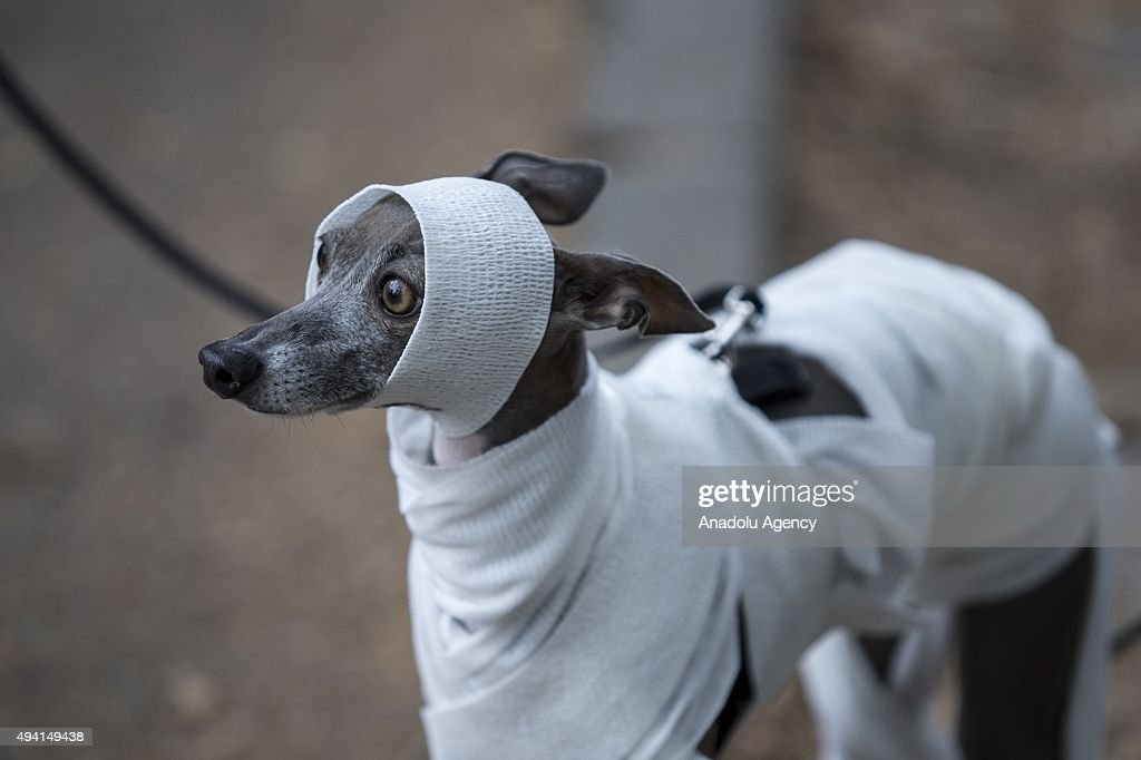 Halloween Dog Parade in New York : News Photo