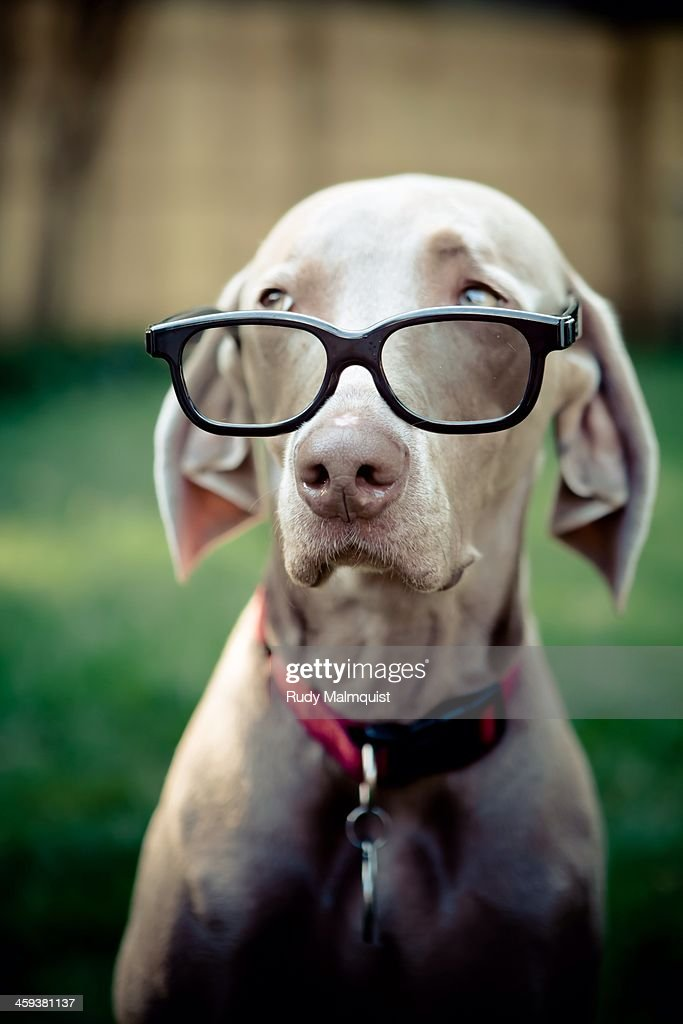 Dressed Up Dogs : Stock Photo