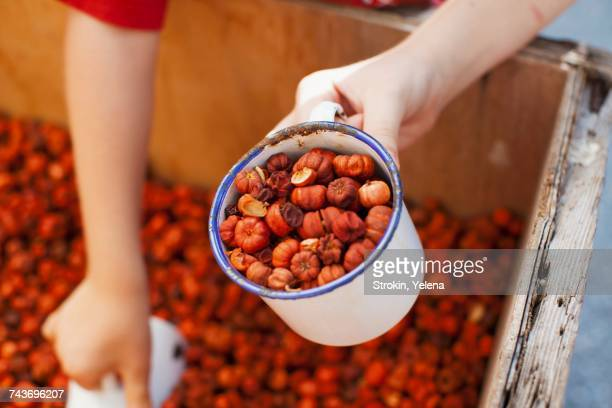 Dried baby pumpkins as aromatic pot pourri in an enamel mug