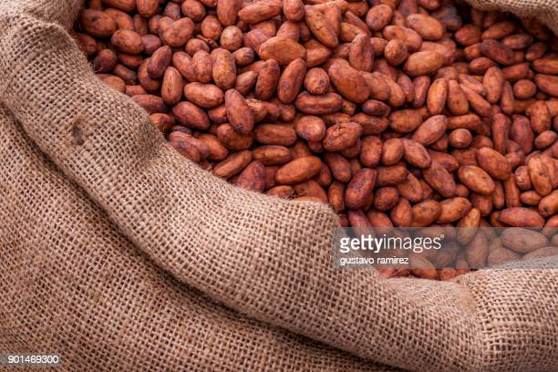 dried beans of organic cocoa