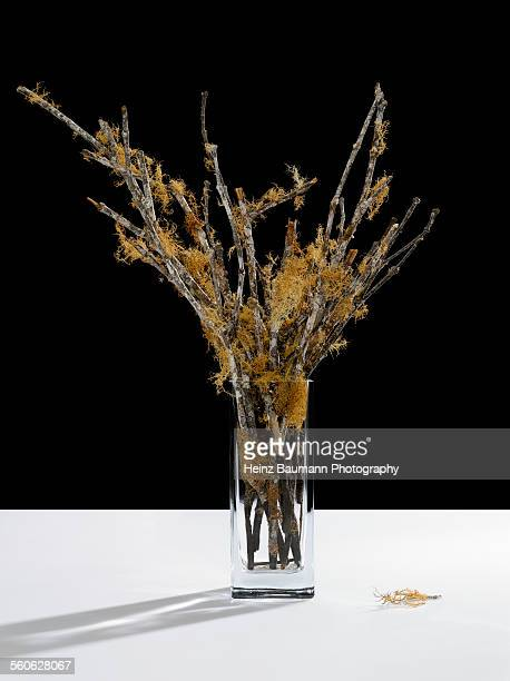 Dried branches in a crystal vase on black backgrou