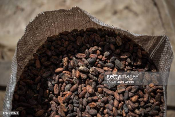 Dried cacao beans in a farm in Sao Felix do Xingu Para state northern Brazil on August 7 2013 AFP PHOTO / YASUYOSHI CHIBA