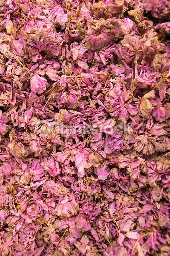 Dried Cherry Blossom Petals Texture Stock Photo