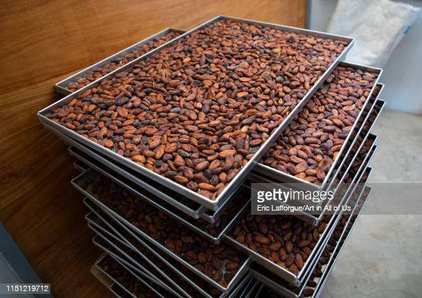 Dried cocoa beans in a factory SudComoé GrandBassam Ivory Coast on May 11 2019 in Grandbassam Ivory Coast