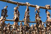 dried cod heads hanging drying rack