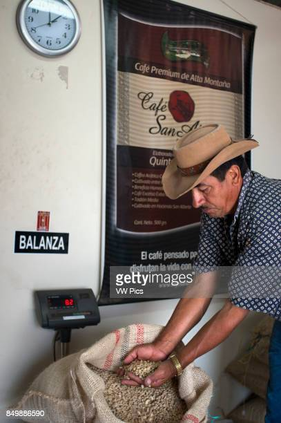 Dried coffee beans ready for roasting at Hacienda San Alberto. Buenavista town, Quindio, Colombia. Colombian coffee growing axis.