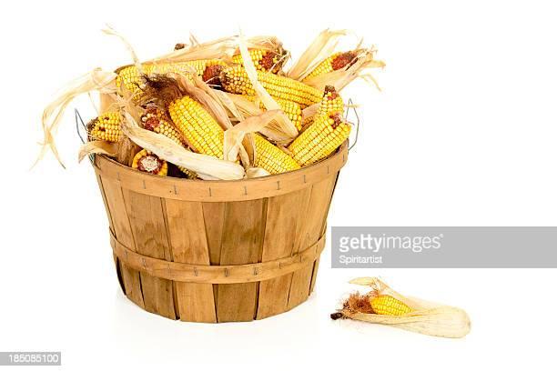 Secado maíz en una cesta Bushel