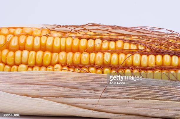 Dried corn isolated on white background.