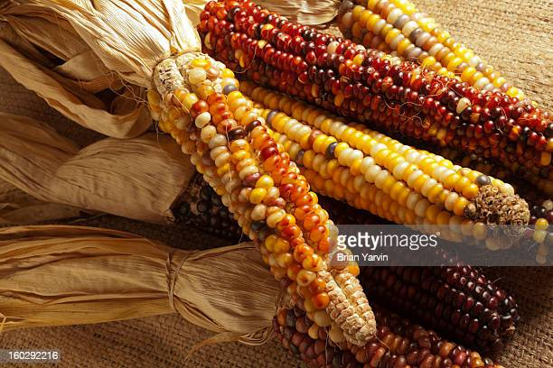 dried corn, sometimes called indian corn - indian corn stock photos and pictures